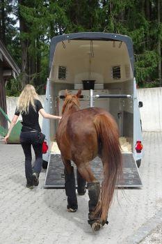 Pferd in Hänger einsteigen